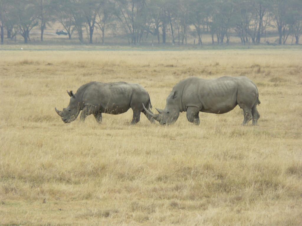 Lake Nakuru, safari
