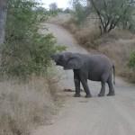 Safari, Kruger, Sudafrica