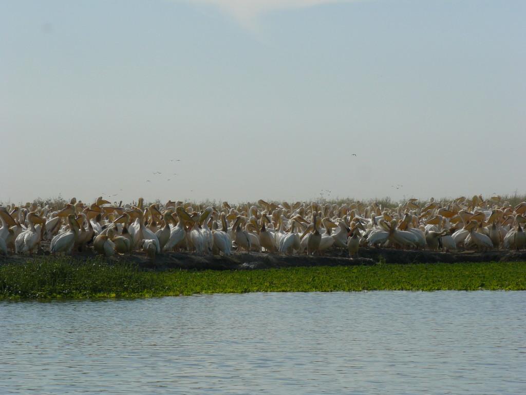 Djoudj, Senegal