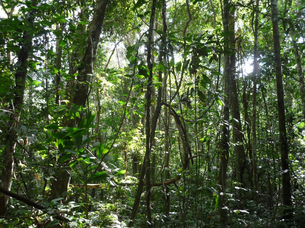 Foresta amazzonica, Bolivia