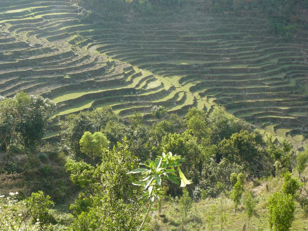 Risaie, Beni, Nepal