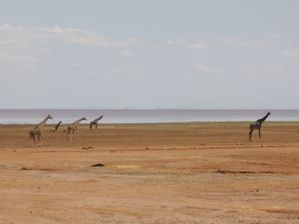 Safari, Lake Manyara