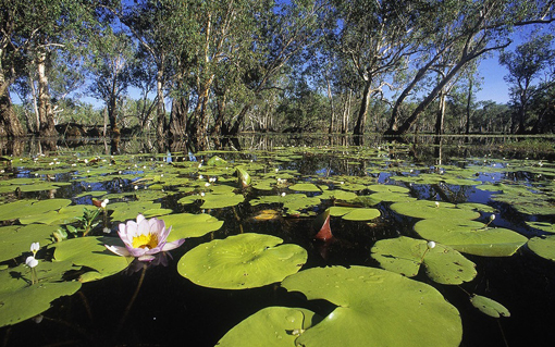 Kakadu Australia  City new picture : Kakadu National Park, Australia | Trip it Easy