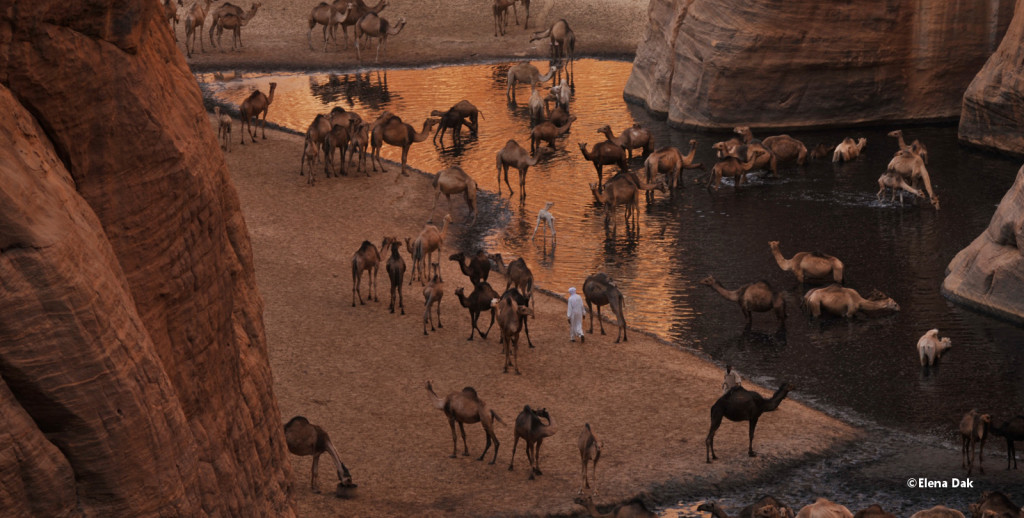 Oasi, Deserto, Niger