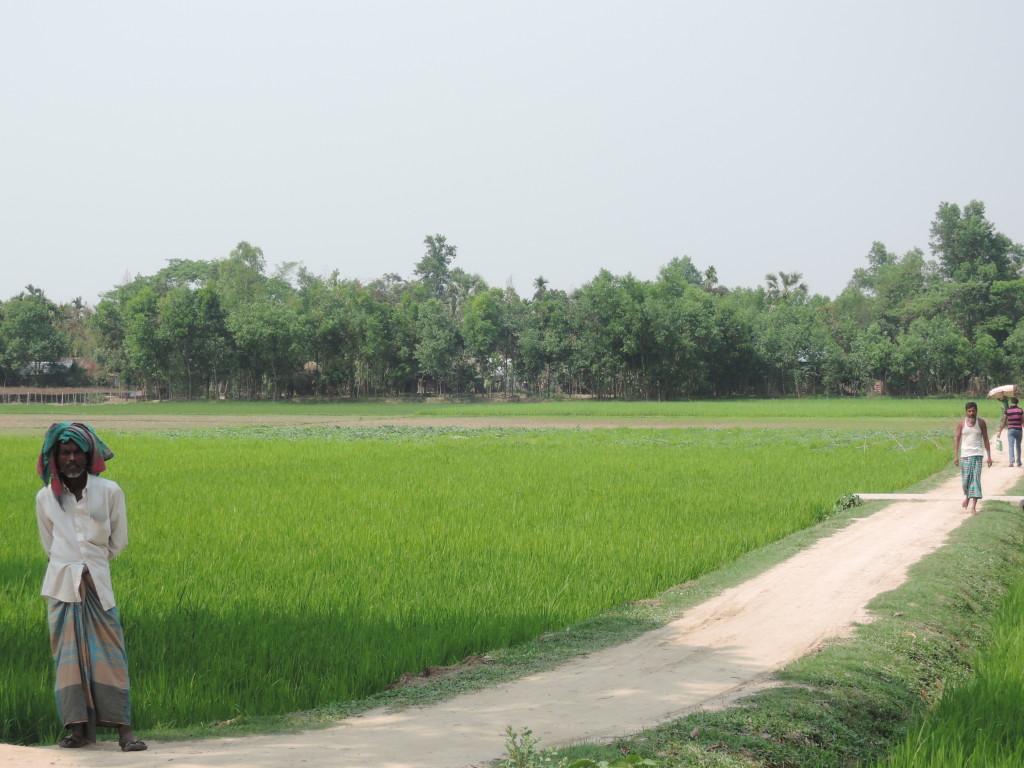 Risaie, Bangladesh