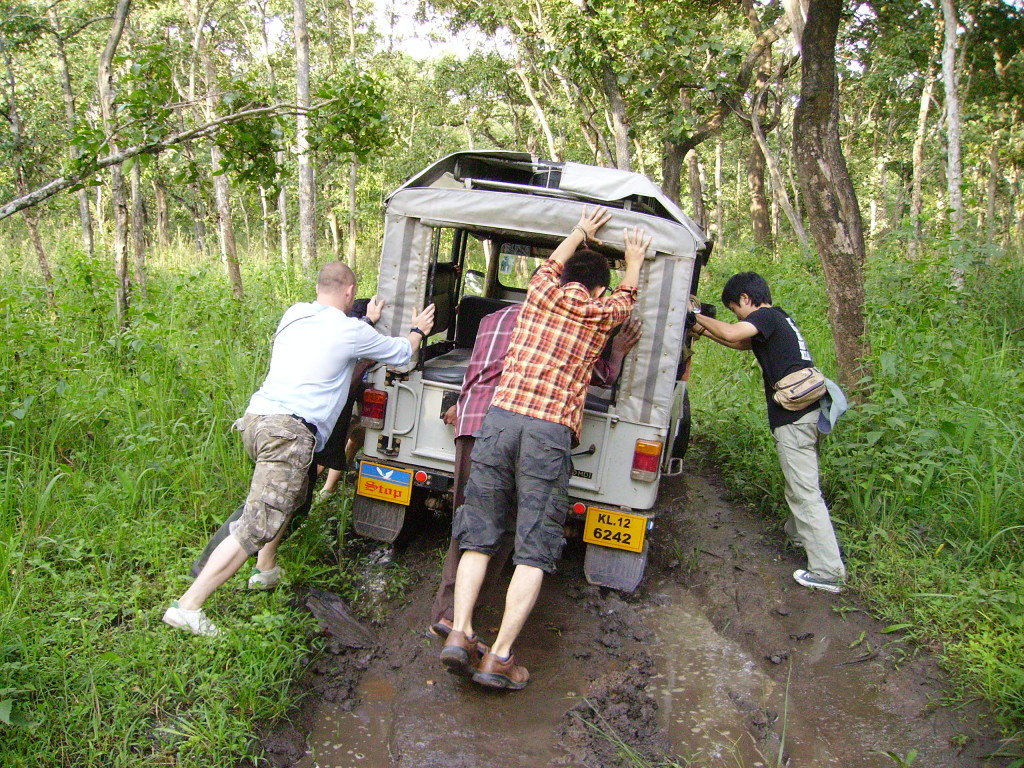 Wayanad Sanctuary, Safari