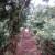 Monteverde, Costarica