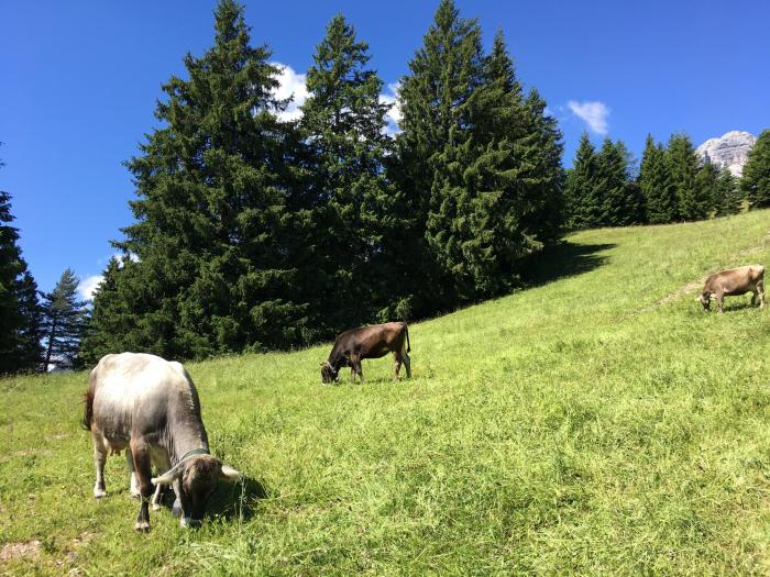 Andalo, Trentino