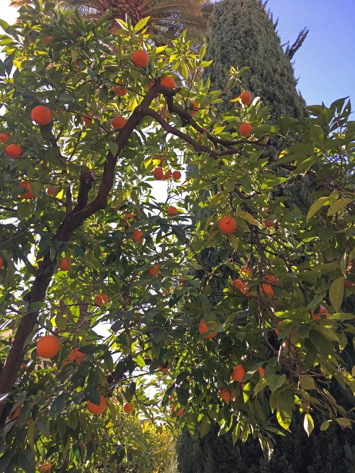 mandarini-andalusia